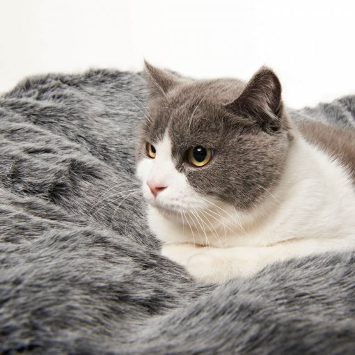 Small med pet bed with cat