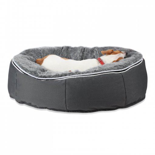 Small medium pet lounger with jack russel back view